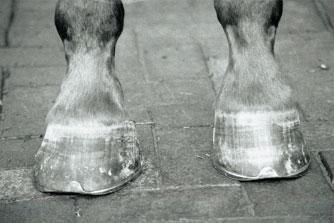 Horses hooves